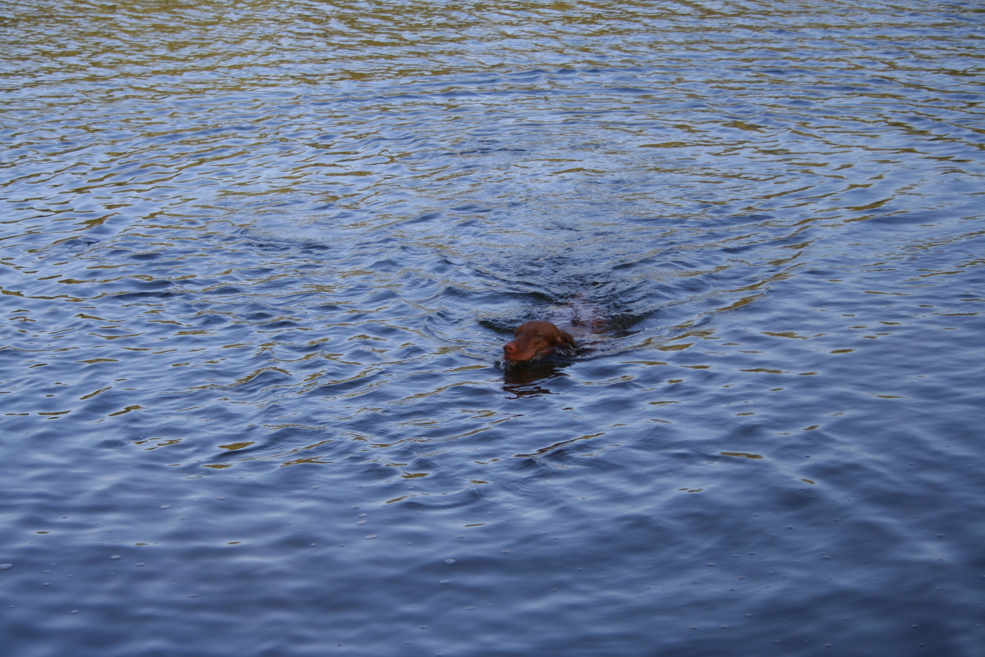 The <i>real</i> Loch Ness monster!